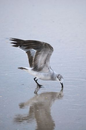 Seagull Stok Fotoğraf