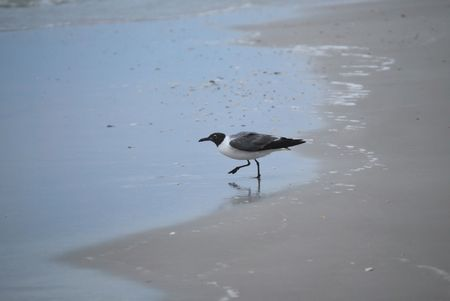 Tern Wading on the Shore