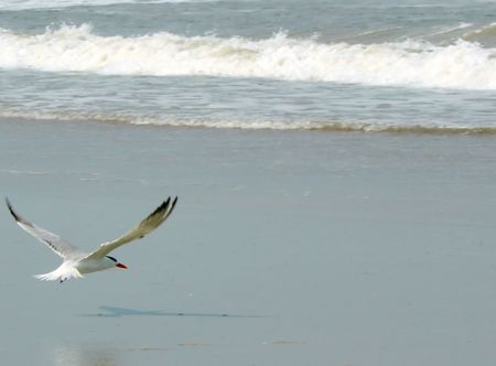 Flying Gull Casting Shadow on the Sand