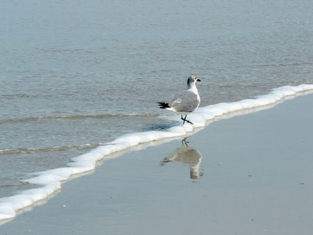 wading: Seagull Wading on the Beach Stock Photo