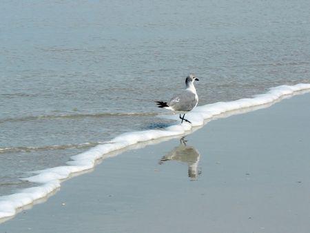 Seagull Wading on the Beach Stok Fotoğraf