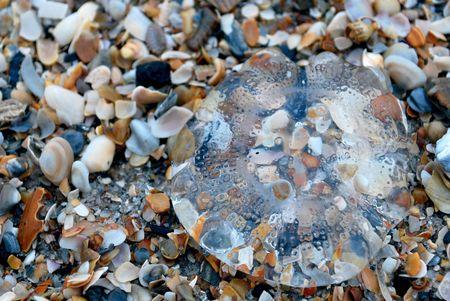 beached: Beached Jellyfish