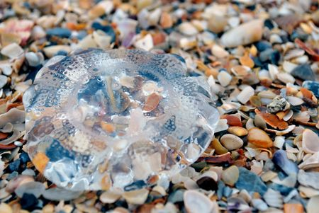 beached: Beached Jellyfish