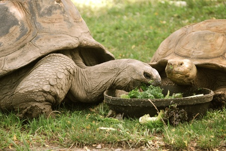 Tortoises Stok Fotoğraf