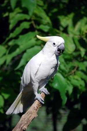 Cockatoo Stok Fotoğraf