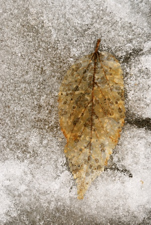Frozen Leaf Stok Fotoğraf