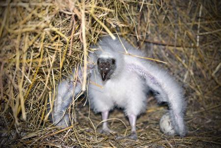 Baby Vulture Stok Fotoğraf