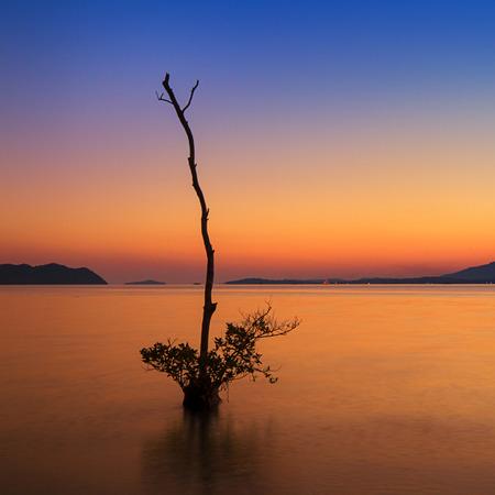 mangrove tree at sunset photo