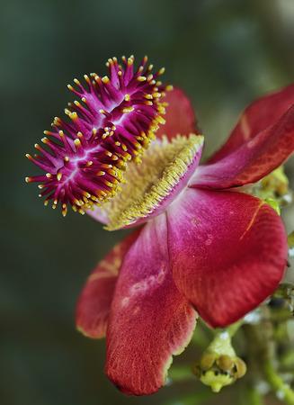 tree flower photo