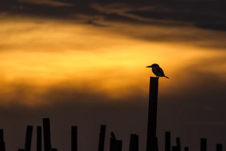 to muffle: Kingfisher Silhouette