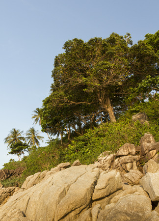 Trees over the Rocks photo