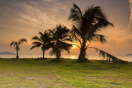 Palm Tree Sunrise photo