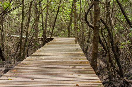 statutes: The Wooden Path