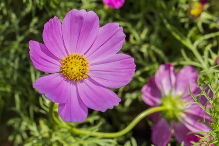 wild flower: wild flower