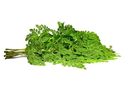 oleifera: moringa oleifera branches