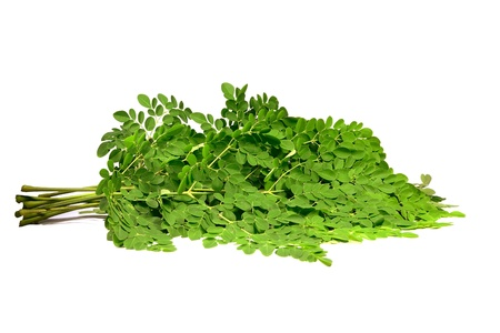 miracle leaf: moringa oleifera branches