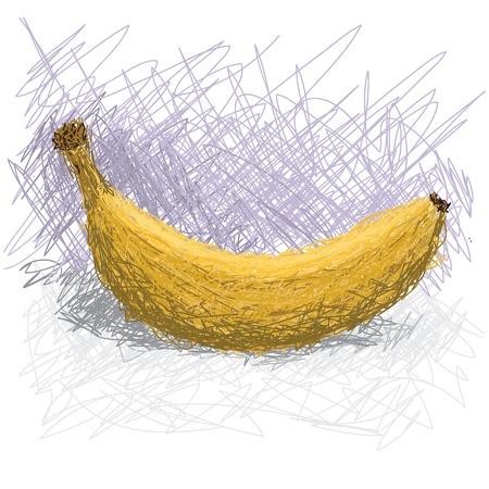 musa: closeup illustration of cavendish banana fruit, with scientific names musa acuminata and musa balbisiana.