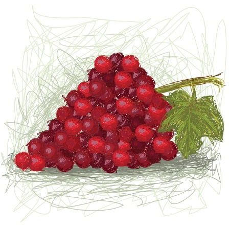 grapes in isolated: closeup illustration of a fresh grape fruit. Illustration