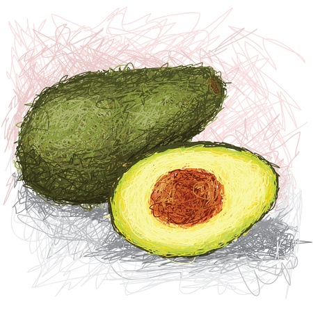 closeup illustration of a fresh avocado fruit. Vector