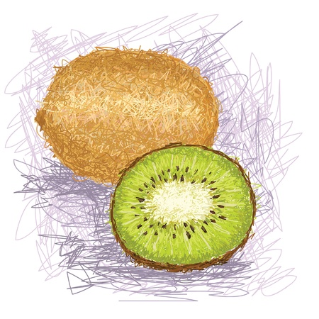 kiwi: closeup illustration of a fresh kiwi fruit