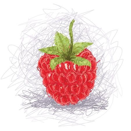 closeup illustration of a fresh raspberry fruit