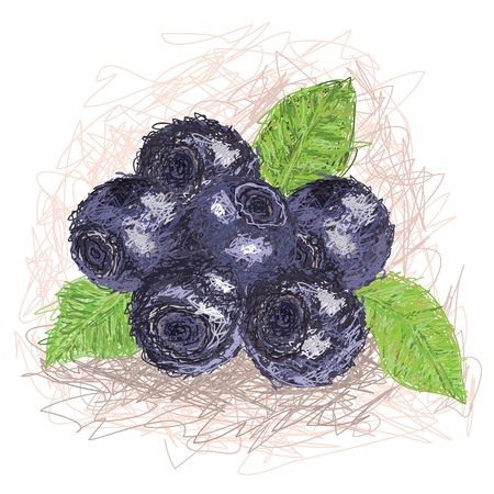 closeup illustration of a fresh blueberry fruit  Vector