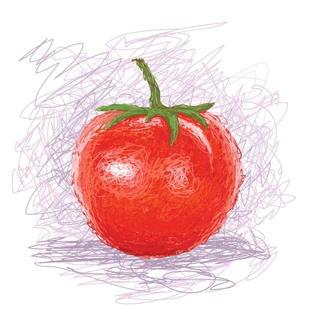 closeup illustration of a fresh tomato fruit  Illustration