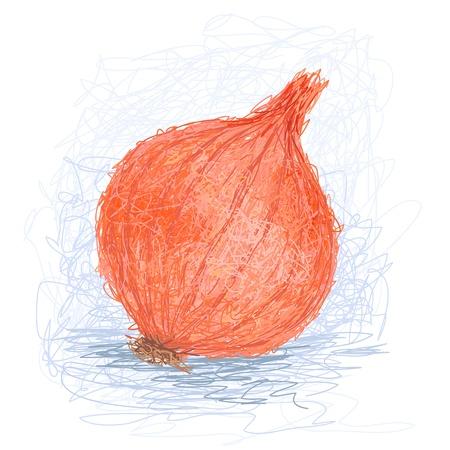allium: closeup illustration of a fresh orange onion bulb.