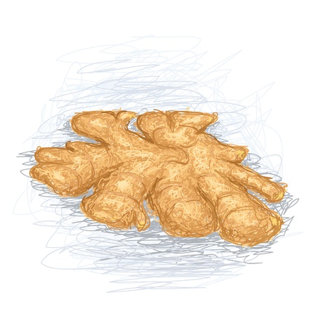ginger root: closeup illustration of a fresh ginger root.