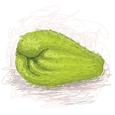 closeup illustration of a fresh chayote fruit.