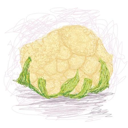 closeup illustration of a fresh cauliflower vegetable. Stock Vector - 14346931