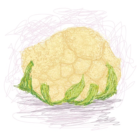 brassica: closeup illustration of a fresh cauliflower vegetable. Illustration