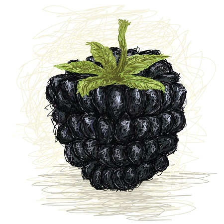 bramble: closeup illustration of a fresh blackberry fruit. Illustration