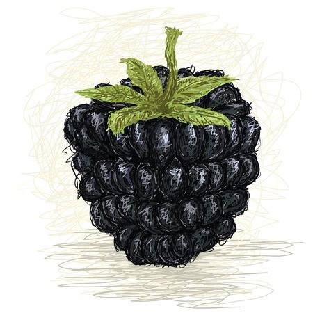 dewberry: closeup illustration of a fresh blackberry fruit. Illustration