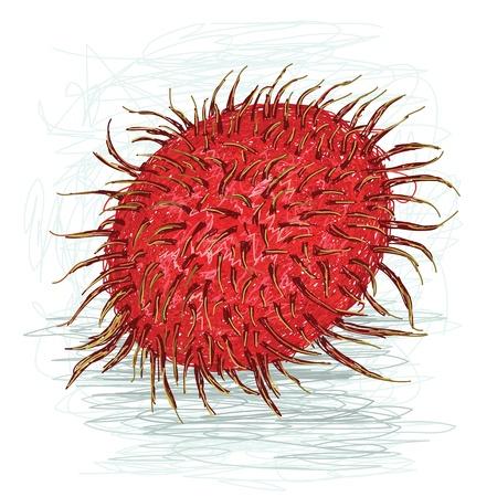 rambutan: closeup illustration of a fresh ripe rambutan fruit.