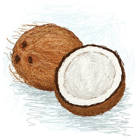closeup illustration of a half and whole coconut.
