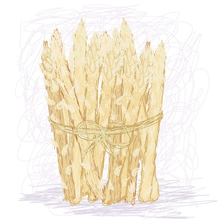 side dish: closeup illustration of a fresh bunch of rare white asparagus vegetable.
