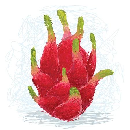 closeup illustration of a fresh exotic dragon fruit. Stock Vector - 14608827