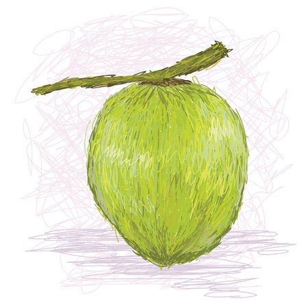 closeup illustration of a fresh coconut fruit. Stock Vector - 14608826