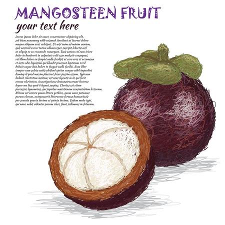 mangosteen: closeup illustration of fresh whole and half mangosteen fruit.