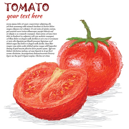 closeup illustration of fresh tomato fruit, vegetable isolated in white. Illustration