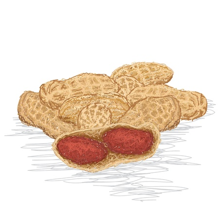 nutshell: closeup illustration of fresh stack of groundnut isolated
