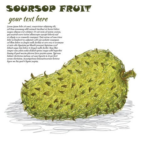 annona: closeup illustration of a fresh soursop fruit isolated in white background  Illustration