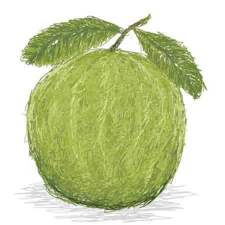 closeup illustration of fresh guava fruit Stock Vector - 15194577