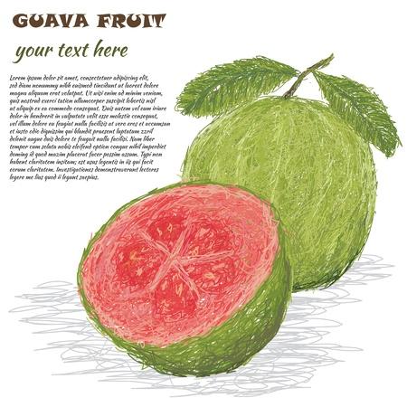 guayaba: ilustración del primer de guayaba fresca aislada en el fondo blanco