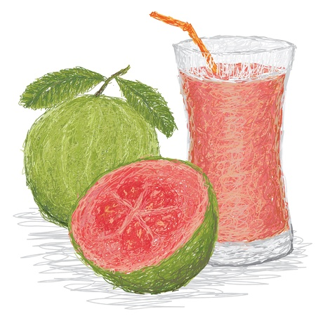 guava: closeup illustration of fresh guava fruit and a glass of guava juice isolated in white background  Illustration