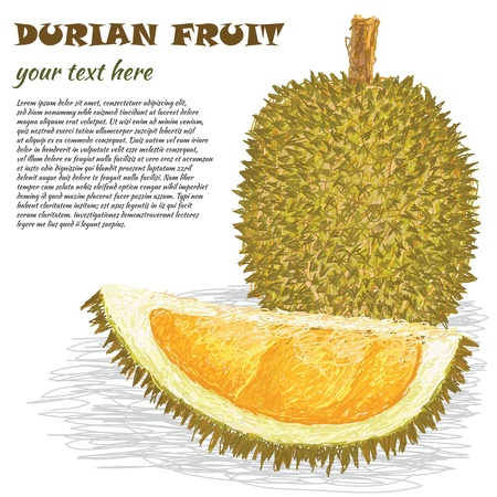 pungent: closeup illustration of ripe whole and half durian fruit