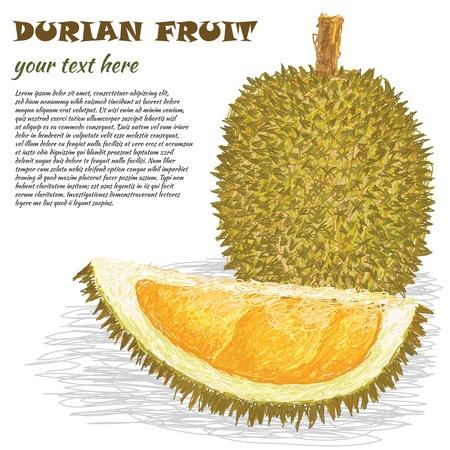 Durian: minh họa chụp gần của toàn bộ chín và quả sầu riêng nửa