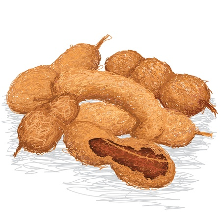 tamarindo: Primer ejemplo de grupo de tamarindo maduro aislado Vectores