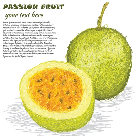 grenadilla: closeup illustration of fresh passion fruit isolated in white background